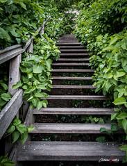 Escaleras de madera (adrivallekas) Tags: wood trip travel plants green up stairs canon denmark madera plantas stair canoneos escaleras dinamarca mistery stariway subir kobenhavn copenhague canon70d