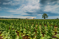 North Carolina Farmland (Avisek Choudhury) Tags: landscape northcarolina farmland gitzo nikond800 avisekchoudhury acratechballhead nikon1635mm httpwwwaviseknet avisekchoudhuryphotography