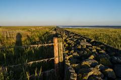Am Zaun 1 (blickwinkel77) Tags: meer natur zaun landschaft nordsee kste