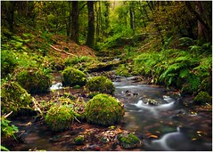Babbling Brook (c.richard) Tags: longexposure autumn water woodland landscape moss woods stream somerset autumnleaves autumncolours naturereserve ferns picturesque harridgewoods