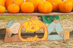 Just hanging out (AndiVanPhotog) Tags: orange fall halloween big little pumpkins scarecrow harvest inbetween balesofhay seaoforange douglasvillega pumpkinpatch2015 shepherdofthehillsumc
