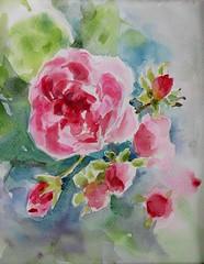 Dernière roses. (geneterre69) Tags: roses fleur aquarelle