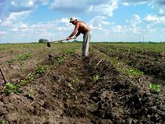 Uruguay - Agricultura © Góngora