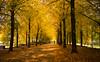 Fahrrad Highway (p.niebergall) Tags: highway promenade blätter bäume fahrrad münster farben pathways herbstliche twittertuesday