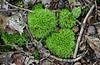 Design by Moss (timmerschester) Tags: plants nature leaves moss sticks woods michigan huroncountynaturecenter