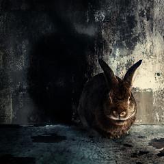 Halloween Bunny (Jeric Santiago) Tags: shadow pet rabbit bunny halloween scary conejo horns devil lapin hase kaninchen   compositephotography conceptualphotography fineartsphotography winterrabbit