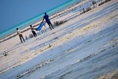 Blue on Blue (Everything Colourful) Tags: ocean africa blue sea net beach water work tanzania fishing fisherman child turquoise tide indianocean young help shore zanzibar lowtide collaboration collective cooperation swahili jambiani