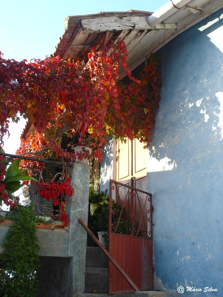 Águas Frias (Chaves) - ... varanda engalanada com folhagem outonal - nov 2007