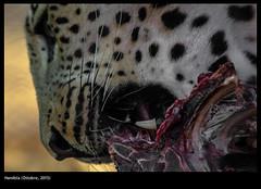 Namibia (Ottobre - Novembre 2015)bia_B_100_1300 (buiobuione) Tags: namibia etosha windhoek sossusvlei capecross skeletoncoast caprivi namibdesert africat