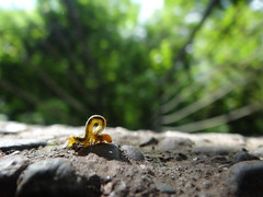 "(Cristian ""The Skinny"") Tags: macro worm gusano insecto"