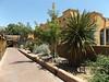 Old Town Albuquerque - New Mexico (Dougtone) Tags: cactus house newmexico church fountain downtown albuquerque cannon oldtownalbuquerque