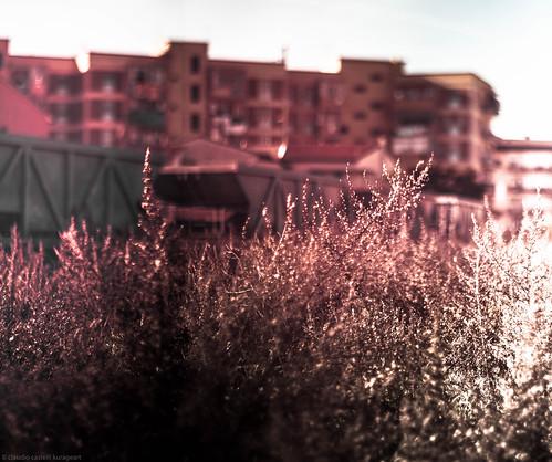amenità floreale con sfondo pratico