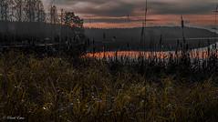 Dark misty reed (Patrik Estius) Tags: sea mist lake reed nature misty fog nikon europe gallery sweden outdoor schweden norden skandinavien småland nordic sverige scandinavia suecia jönköping hok dimma sjö suède nordique vass nórdico escandinavia scandinavie supershot nordisch estius abigfave vaggeryd jönköpingslän d3300 patrikestius ulvstorp hokasjön