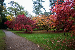 DSC03169 (Elementjrose7) Tags: uk autumn trees england fall colors arboretum westonbirt