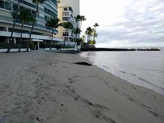 2015HawaiiPhone (10 of 82) (bikeandsail) Tags: hawaii oahu honolulu monkseal 2015 uncruise otanikaimanabeachhotel