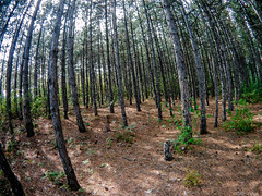 Fish eye (@Dpalichorov) Tags: outdoor landscape nature forest tree trees plant grass fisheye fish eye wideangle wide angle nikond3200 nikon d3200 actioncamera action camera firefly6s firefly 6s bulgaria varna   autofocus ngc