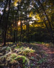 Light plays at Crescent Lake Southington, CT (crmanski) Tags: crescentlake southingtonct vertorama autumn