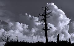 Contrast - Contraste (Yako36) Tags: portugal peniche ferrel nature natureza nuvens clouds landscape paisagem bw nikon8020028 nikond750
