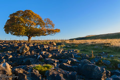 Lone Tree (parry101) Tags: brecon beacons national park pontneddfechan landscape lone tree ystradfellte trees sunrise morning nature outdoor
