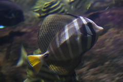 IMG_5682 (godpasta) Tags: newportaquarium kentucky newport aquarium