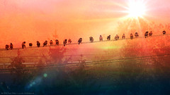 Birds on power supply line/Vgel auf Stromleitung (Ranger56112) Tags: vogel vgel bird birds lahnstein rhinelandpalatinate tier tiere animal animals bume trees sromleitung powersupplyline outdoor landschaft landscape natur nature sonne sund sonnenaufgang sunrise germany himmel sky heaven