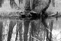 Mirror (petia.balabanova(tnx for +1.500.000 views)) Tags: acqua biancoenero bolledimagadino blackandwhite bw monochrome monocromo trees plants water nature mirror reflection switzerland travel ticino nikond800 105mm