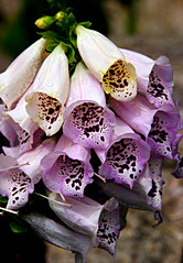 0171-san francisco- (danvartanian) Tags: california flowers nature