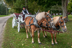 Love & Marriage...go together like a Horse & Carriage! (janedsh) Tags: sharpfamily horner people morgan holman photography wedding photo by steve holmanphotoscom ed holmanphotography photobysteve