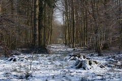 ckuchem-7675 (christine_kuchem) Tags: asthaufen baumstamm eis forst frost haufen holz staatsforst stmme tiere unterschlupf wald wasser wildnis winter winterschlaf winterwald gefroren gewsser kalt naturnah reif schnee wild ste