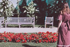 Secret Garden (Violette Nell) Tags: nature landscape jardin garden travel places mood atmosphere youth dreamy flowers plants fleurs floral analog violettenell nostalgia france paysage summer summertime girl vintage portraitargentique 35mmcolorfilm filmphotography secretgarden ethereal feelings poetry roses analogue red color blossom aesthetic 花 model