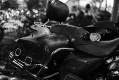 Oyster Run 2016 (SimplySillyStudios) Tags: netzahgarcia simplysillystudios britishcolumbia bc nikon nikond750 nikkor35mm nikkor35mm14 fraservalley anacortes oysterrun christianmotorcycleassociation cma bikes motorbikes motorcycles washington christians service menofgod ministry photographer tourist traffic bikerbi bikerb biker bikerbit bikerbitch christianmotorcyclistsassociation wwwsimplysillystudioswordpresscom