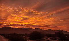 First Sunrise (http://fineartamerica.com/profiles/robert-bales.ht) Tags: facebook fineart flickr photouploads imagekind sunrise sunset redsky sunrays twilight yellow clouds ocotillo landscape panoramic southwestphotography beautiful sensational spectacular sceniclandscapephotography desertphotography awesome magnificent peaceful surreal sublime sonora inspirational path morning haybales silhouette scenic sunrisephotography red sonoradesert robertbales west desertecosystem desert nature sky yuma sun gilamountains goldwaterairforcerange