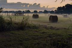 _MG_4284-Edit (Scott Sanford) Tags: canon eos 6d texas outdoor naturallight summer morning nature hayfield hay pasture sunrise fog ef2470f28l