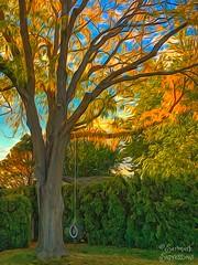 Until Next Year--HSS! (amarilloladi) Tags: iphone tireswing trees fall autumn hss sliderssunday