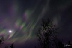 Auroras and moon (spwasilla) Tags: aurora auroraborealis northernlights alaska night sky canon7d tokina1116mm canon stars trees lunar moon lights green