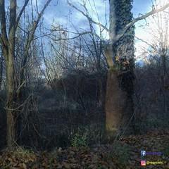 #sz #autumn #landscape #tokodaltr #tjkp #november #unique #photo #weather #last (szebasztinnagy) Tags: landscape tjkp tokodaltr autumn last november sz weather unique photo