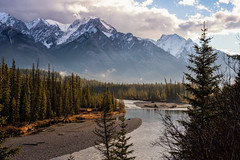 Golden Morning in Banff (Kristin Repsher) Tags: alberta banff banffnationalpark bowriver canada canadianrockies castlemountain clouds d750 goldenhour morning mountains nikon rockies rockymountains sunrise