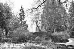 winter (bluechameleon) Tags: sharonwish blackandwhite bluechameleon bluechameleonphotography bridge canada fallingsnow foliage ice landscape lostlagoon mist outdoors snow snowflakes stanleypark trees vancouver winter monochrome