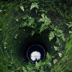 (*YIP*) Tags: film filmcamera filmphotography shootfilm squareformat mediumformat analogcamera analog 120 120mm 6x6 filmonly analogphotography kievcamera