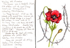 Remembrance (Hornbeam Arts) Tags: poppy barbed wire art sketch watercolour
