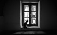 the inhabitant (ChrisRSouthland (mainly off and at work...)) Tags: athens kaisariani monastery mm mmonochrom leicammonochrom elmarit28mmf28 blackwhite bw cat window interior monochrome inhabitant