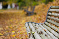 Autumn has come (Polo-Foto) Tags: autumn leaves bench leaf background park fall leafs city landscape yellow season dry colorful tree orange outdoor wood relax weather november beautiful nature horizontal trees beauty green depth walkway autumnal red natural light gorgeous silence outdoors life peace bokeh bokehlicious bokehporn pentax pentaxk5 50mm paul tridon evreux