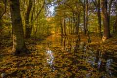 Golden autumn 6 (JTPhotography) Tags: autumn golden leaves trees nature water reflections sunny wildlife rivers lake panasoniclumixg6 olympus918mm