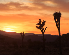 Fire Sky, Joshua Tree NP (Archer_37) Tags: joshuatree joshuatreenationalpark np nationalpark southwest california twentyninepalms unitedstates outdoor desert sunset western night