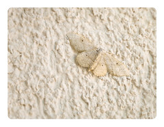 Hello, Neighbor! (Goran Patlejch) Tags: color building wall facade beige moth structure shade rough mimicry instect baumit patlejch gntx goenetix lightivory patlejh ral1015