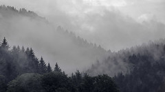 Schwarzwaldblick (BobMah) Tags: trees black misty forest germany landscape cloudy desaturated schwarzwald atmospheric