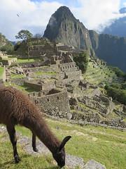 "Machu Picchu <a style=""margin-left:10px; font-size:0.8em;"" href=""http://www.flickr.com/photos/83080376@N03/20980587503/"" target=""_blank"">@flickr</a>"