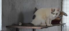 Ludovico (.Vale.) Tags: cats baby animals cat kitten feline kitty kittens gatto gatti rifugio micio micia gattino gatta catshelter gattini micini
