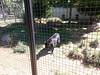20150919_114314 (mjfmjfmjf) Tags: oregon zoo 2015 greatcatsworldpark
