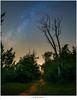 De Melkweg fotograferen (nandOOnline) Tags: tree night forest star bomen fotografie nacht nederland boom lucht bos hemel constellation melkweg donker milkyway fotograferen rips astronomie sterren sterrenbeeld nbrabant stippelberg sterrenstelsel